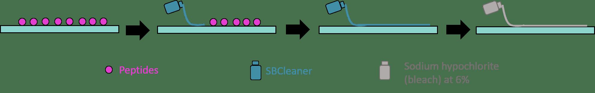 Peptide decontamination guidelines